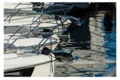 Nautica al palo